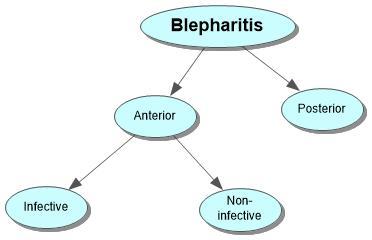 Blepharitis Concept Map