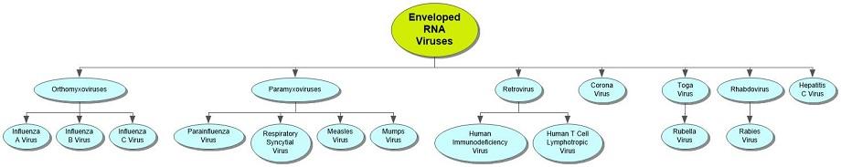 Enveloped RNA Viruses Concept Map