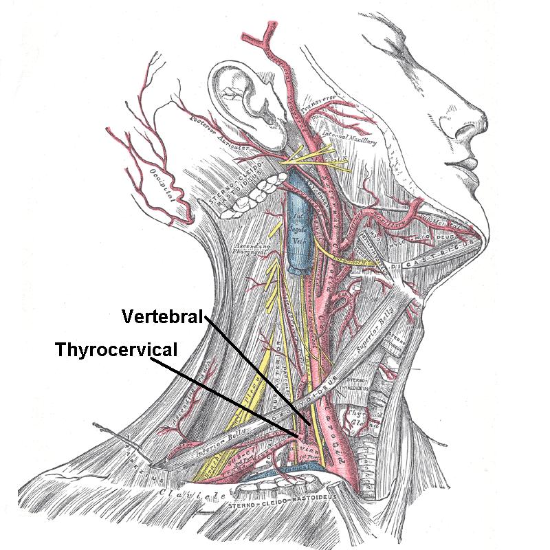 Subclavian Artery – howMed