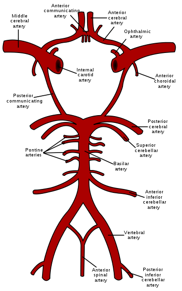 Internal Carotid Artery – howMed