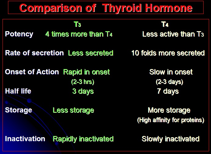 Hormones Of Thyroid Gland Howmed