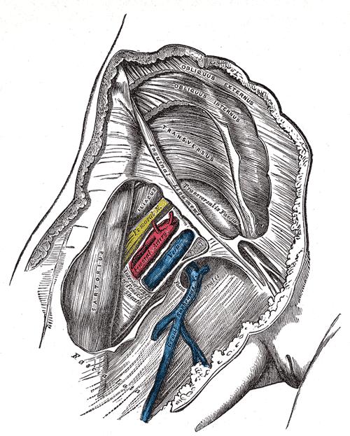Femoral Artery – howMed