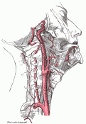 Internal Carotid Artery