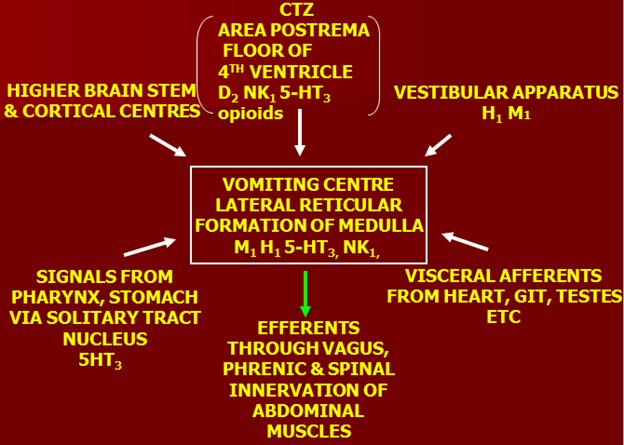 vomiting mechanismNausea And Vomiting Mechanism
