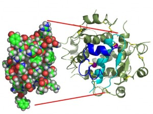insulin structure 2