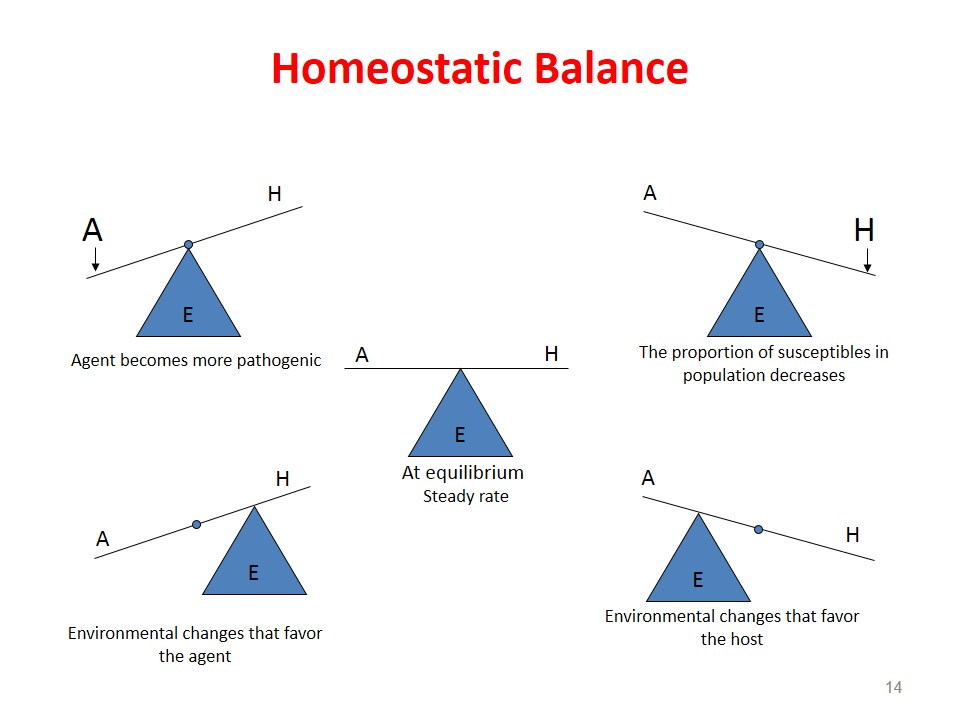 Homeostatic balance